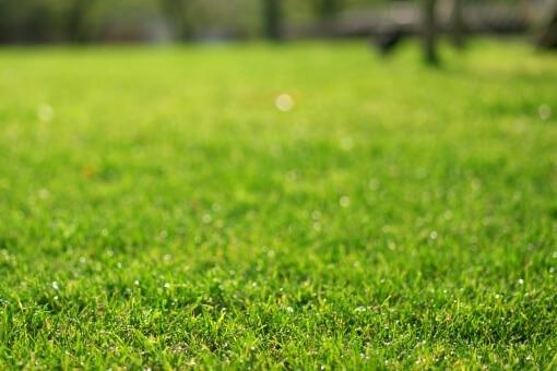 芝生のサッチとサッチングって?